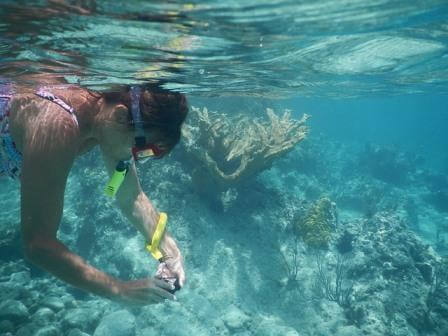 Snorkeling in the reefs surrounding the islands of San Blas in Panama